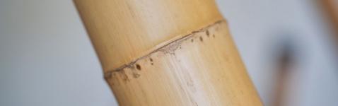 Bamboosegment